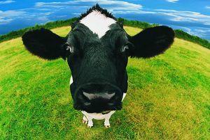 Льготное кредитование сельского хозяйства в 2020 году какие документы необходимо подготовить