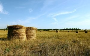 Субсидии на развитие сельского хозяйства в 2020 году - как получить, государства, для юридических лиц